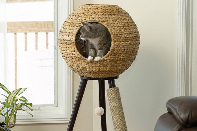 arbre à chat à la maison